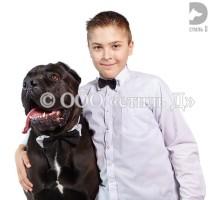 Комплект .Галстук-бабочка-ошейник гбо05 для собаки и галстук-бабочка для человека